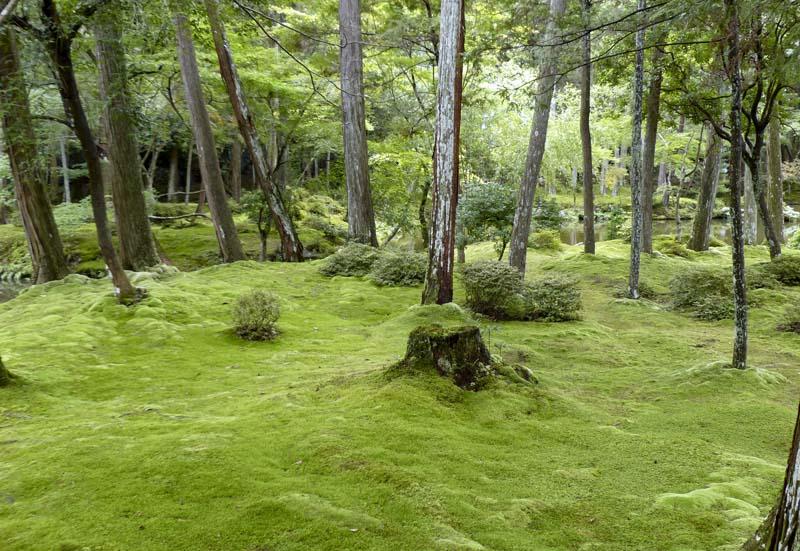 Kokedera - Kyoto